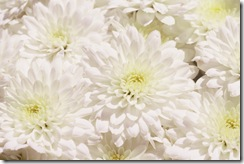 mum-garden-white-marilyn1