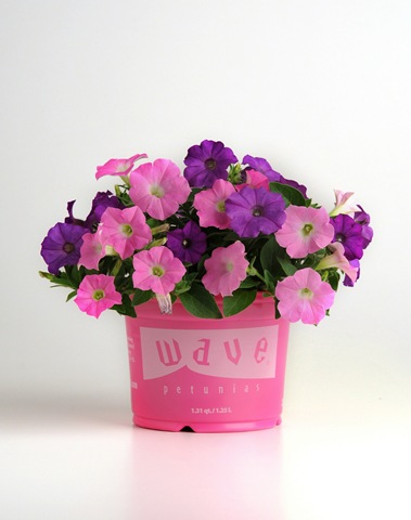 New spring wave petunia medleys fundraiser plants for - Wave petunias in containers ...